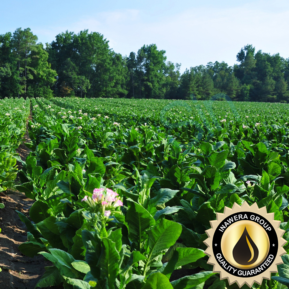 Tobacco Absolute Virginia Inawera